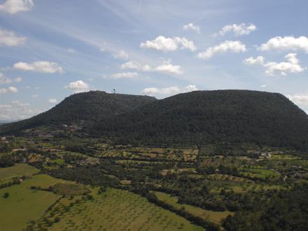 Algaida Image