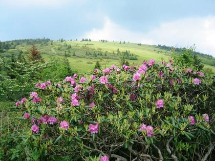 Roan Mountain, Tennessee Image