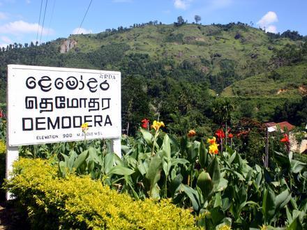 Demodara Image