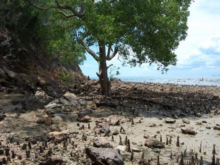 Tanjung Tuan Image