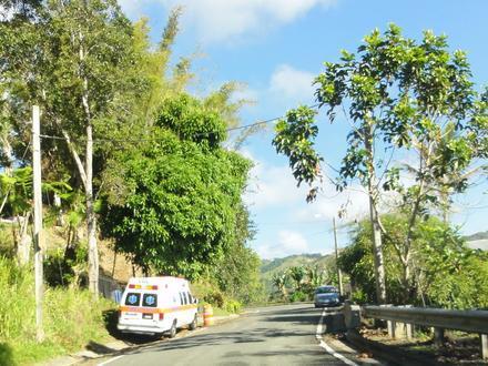 Guaraguao Image