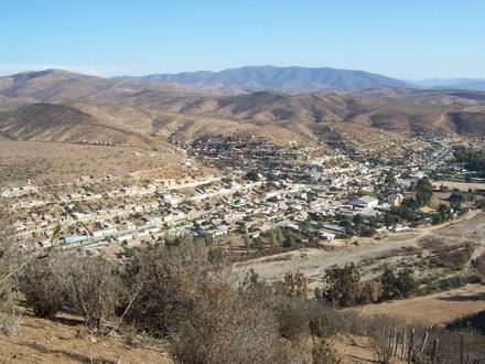 Canela (Chile) Imagen