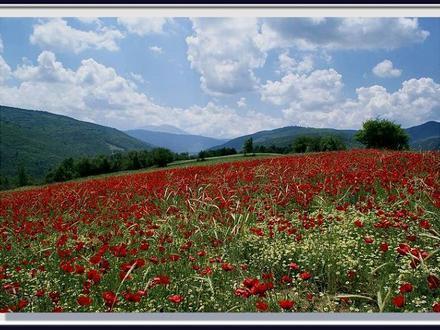 Ilgaz Image